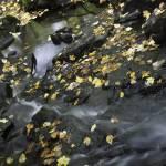 """""""autumn flow"""" by JulieScholz"""