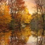 """Foliage Reflected"" by JessicaJenney"