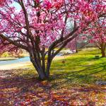 """""""Spring Is Here"""" by hannahsview"""