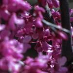"""Looking through Purple"" by HeatherLanza"