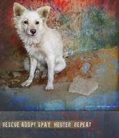 street dog animal rescue poster