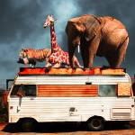 """Barnum and Baileys Fabulous Road Trip Vacation Acr"" by wingsdomain"