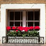 """Geraniums in the Window"" by mjphoto-graphics"