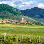 """Wine Country,Wachau Valley"" by mjphoto-graphics"
