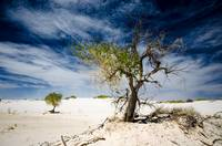 White Sands National Monument #1