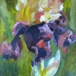 """""""Late Afternoon Iris"""" by susanejones"""