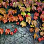 """Fall Wall"" by KjWorthing"
