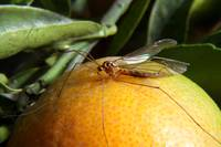 Yellow Insect on an Orange
