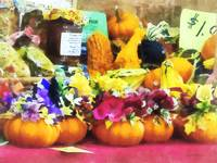 Mini Pumpkins and Gourds at Farmer's Market