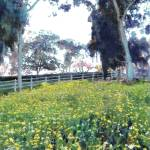 """flowers in meadow by cabrillo bridge 2011"" by BeaconArtWorksCorporation"