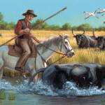 """The Camargue Horse Herding Cattle"" by jacksby"