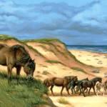 """""""Sable Island Ponies"""" by jacksby"""