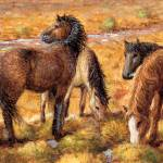"""North American Curly Horses"" by jacksby"