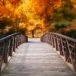 """Autumn Footbridge"" by JessicaJenney"