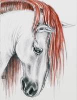Andalusian horse red mane