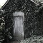 """Ivy Shed"" by feophotos"