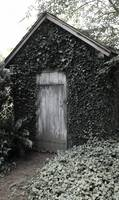 Ivy Shed