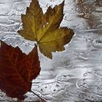 """Rain Streaked Leaves"" by raetucker"