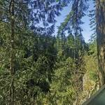"""Capilano Canyon, N. Vancouver 7 April"" by PriscillaTurner"