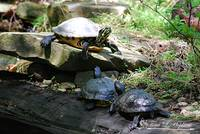 Turtles 20130506_17a