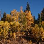 """Fairbanks Fall Treeline"" by StephanieBrower"