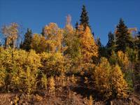 Fairbanks Fall Treeline