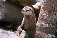 River Otter 20130506_112a
