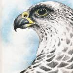 """Gyr Falcon"" by artdeep"