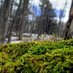 """Moss in Winter"" by AlexisRosasco"