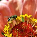 """""""Bee Lovely Hooverfly"""" by DarrinAldridge"""