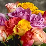 """""""Beautiful Bouquet Of Multicolor Roses"""" by lightningman"""