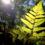 """""""fern lit"""" by LexBozek"""