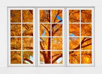 Autumn Maple Tree Through A White Picture Window