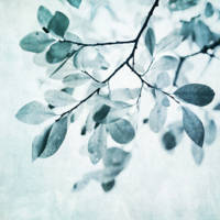 leaves in dusty blues