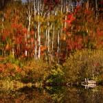 """Warren Lake New Hampshire Reflections"" by bavosiphotoart"