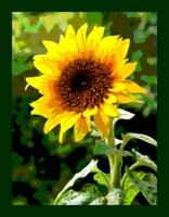 Sunflower Enhanced large border