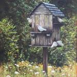 """White Doves using a Dovecote"" by martindavey"