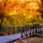 """""""Autumn Crossing"""" by JessicaJenney"""