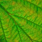 """extreme close-up of leaf"" by RomanPopov"