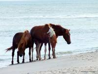Assateague Trio