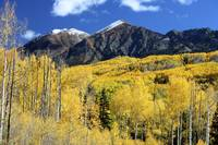 Elk Mountains and Fall Foliage