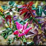 """""""Garden Brilliance"""" by ChrisCrowley"""
