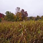 """""""Northern Fields In Autumn II"""" by DigitalFantastique"""