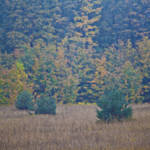 """""""Northern Fields II"""" by DigitalFantastique"""