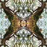 """""""ABSTRACT TREE IMPRESSION, Number 22"""" by nawfalnur"""
