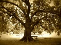 The Reading Tree