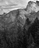 Tree and Three Brothers, Yosemite (B/W)