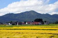 The Fukushima Fields of Summer's End