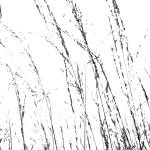 """Wild Grasses Abstract"" by NatalieKinnear"