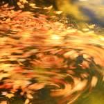 """Autum Swirl"" by RoupenBaker"